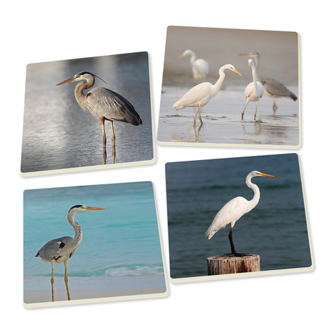 Coaster Set-Herons