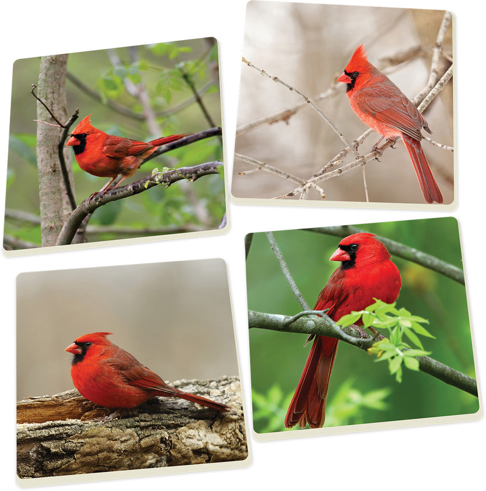Coaster Set-Cardinals