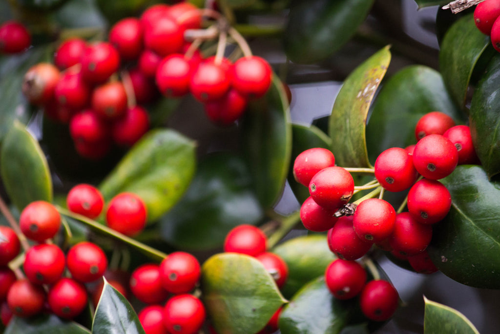 Just Where Does Coffee Come From?