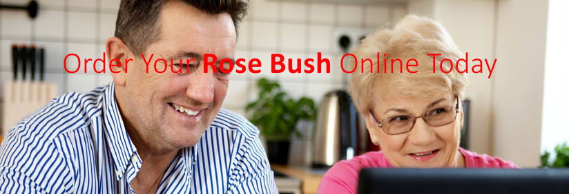 Rose Bush Online | Walkers Nurseries
