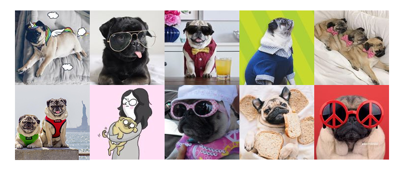 10 Pugs You'll LOVE to Follow on Instagram
