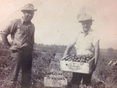 Lino in the tomato field 1950