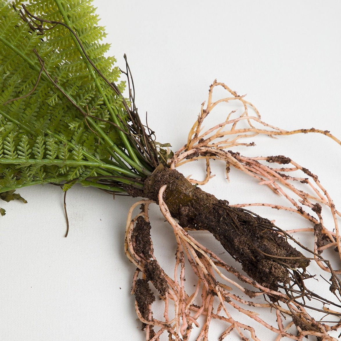 Faux Ferns with exposed roots available at Picnic SF