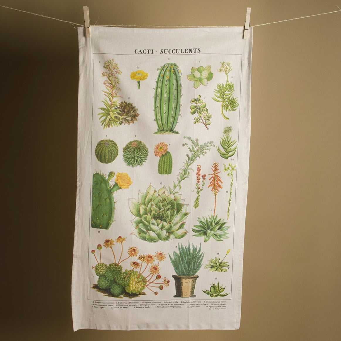 Succulents Tea Towel- Picnic SF