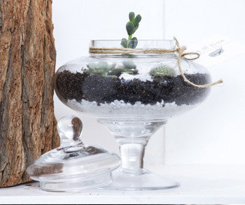 Candy Jar Terrarium