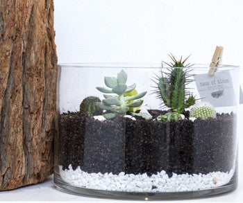 Medium Round Terrarium