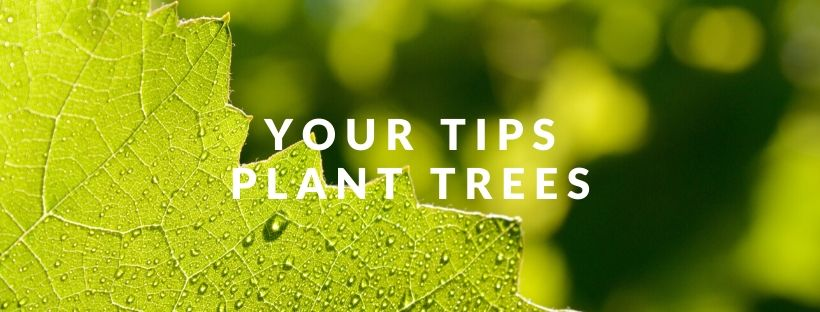 Your Tips Plant Trees Within The Northern Forest Blog Post