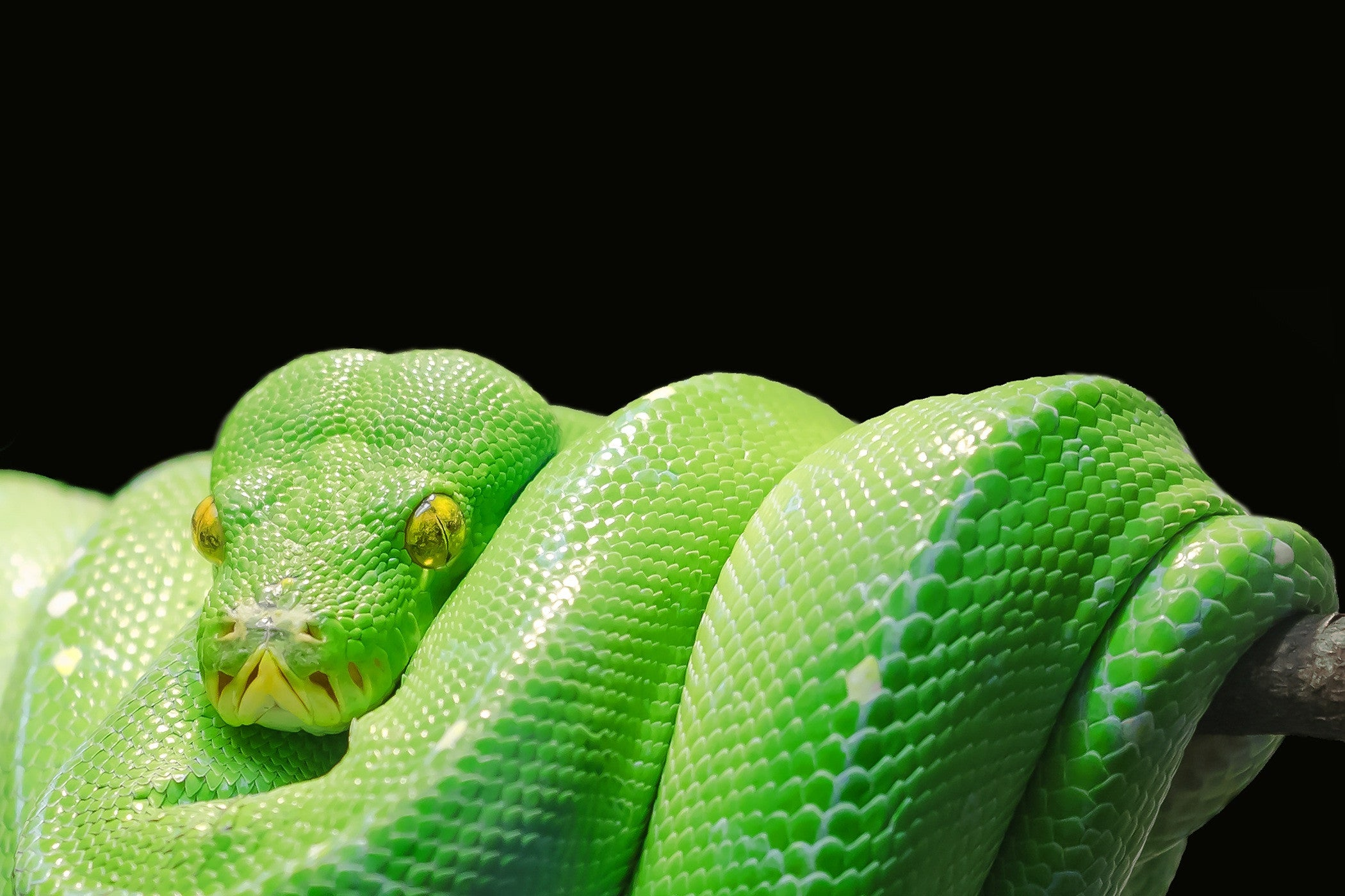 Be Bold and Brave- Discover Snake Symbolism in Jewelry