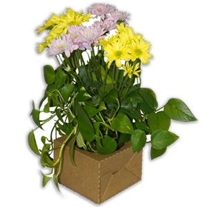 Bouquet Natural (50 per carton)