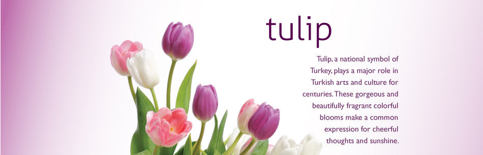 Tulip, a national symbol of Turkey, plays a major role in Turkish arts and culture for centuries. These gorgeous and beautifully fragrant colorful blooms make a common expression for cheerful thoughts and sunshine.