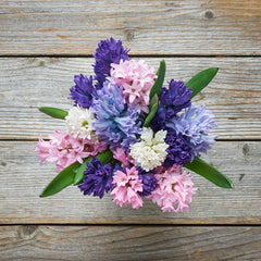 Bouquet of Flowers Hyacinth
