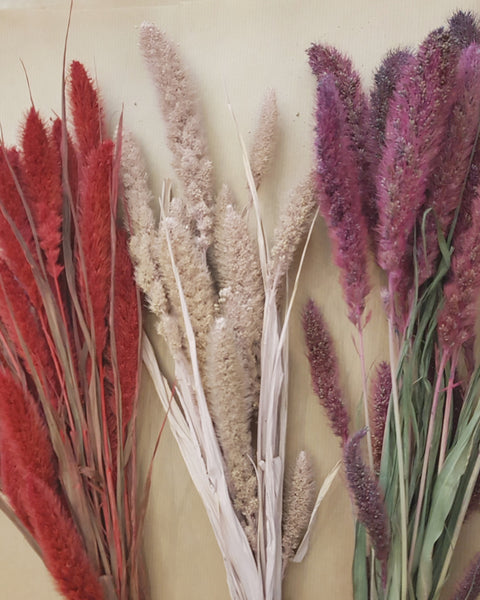 Dried flowers - bunch of setaria