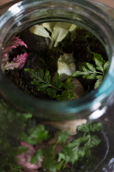 Make your own Pickle Jar Terrarium, Saturday 21st July, 2 - 3.30pm