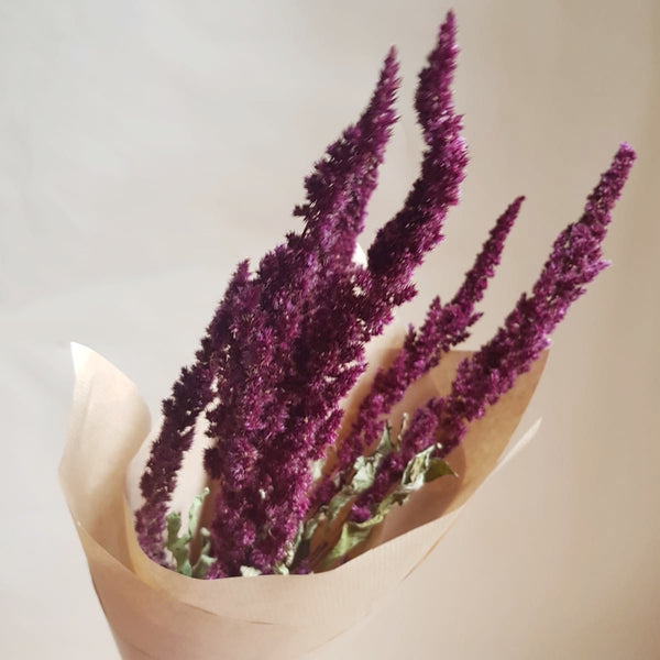 Dried flowers - bunch of amaranthus