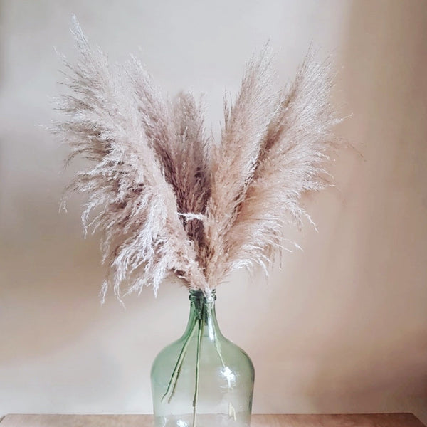 Dried flowers - bunch of pampas grass