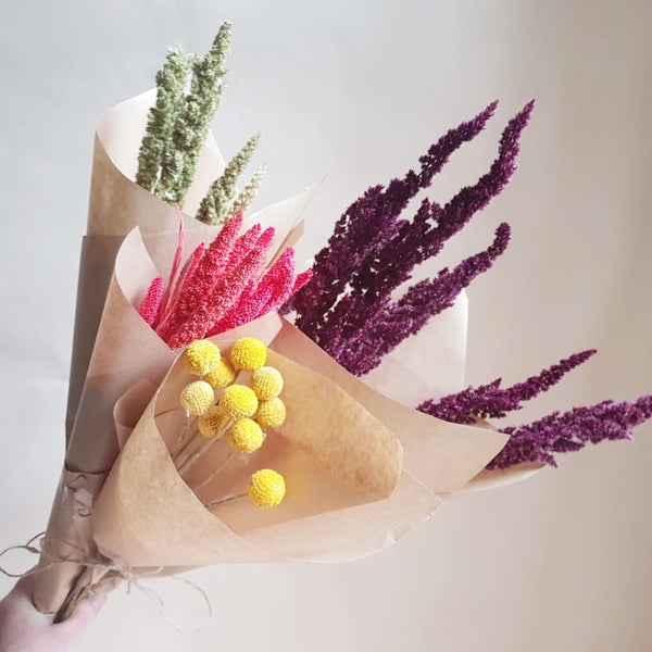 Dried flowers - bunch of craspedia