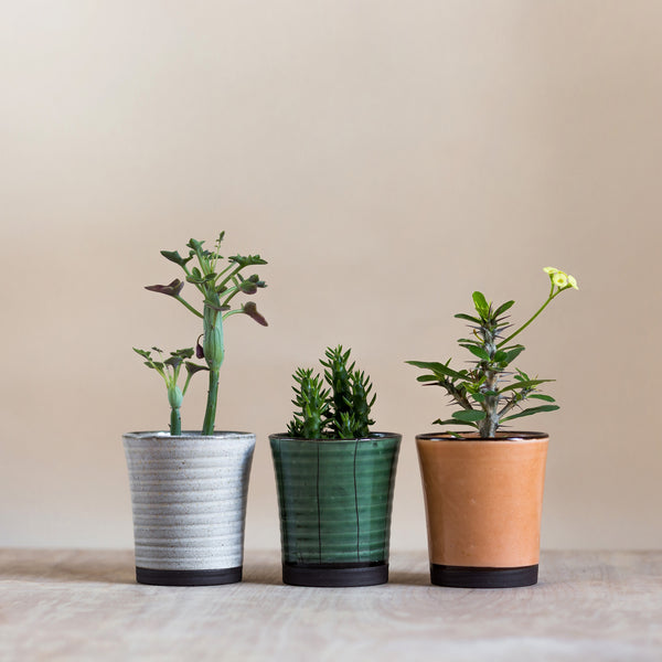 rose and ammi flowers Edinburgh florist ribbed plant pot