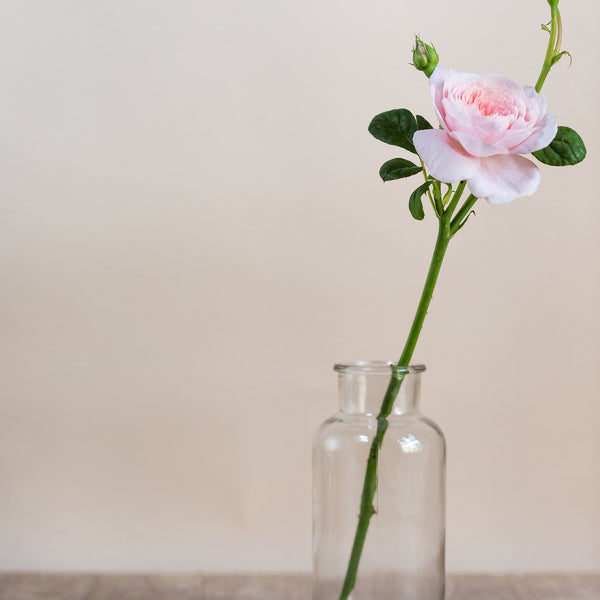 rose and ammi flowers Edinburgh florist small jar vase