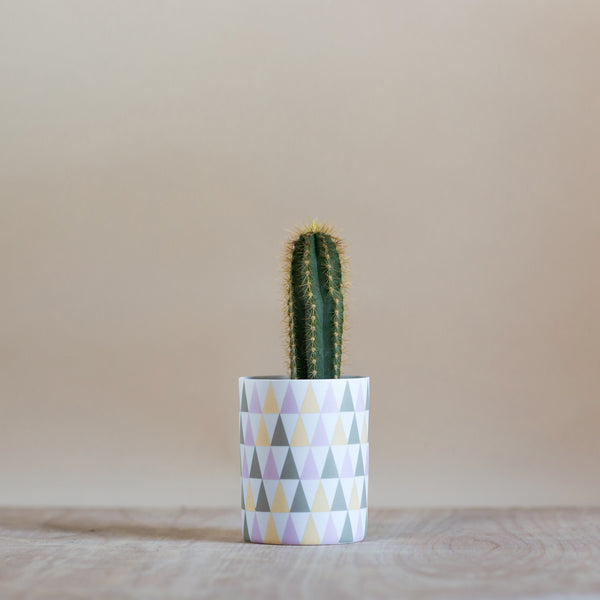 Geometric Plant Pot - Rose and Ammi Flowers Edinburgh florist