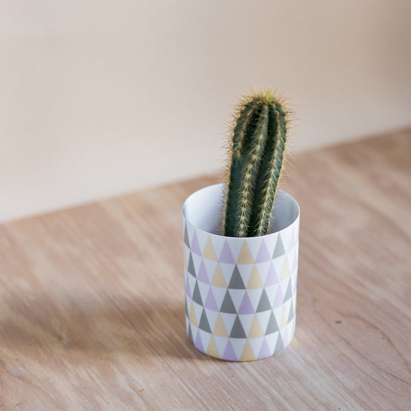 rose and Ammi flowers Edinburgh plant shop geometric plant pot