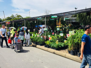 Interesting plants and people from the Suan Luang Plant Fair, 1-10 Dec 2016