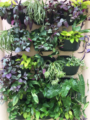 A Vertical Garden at 10 Weeks
