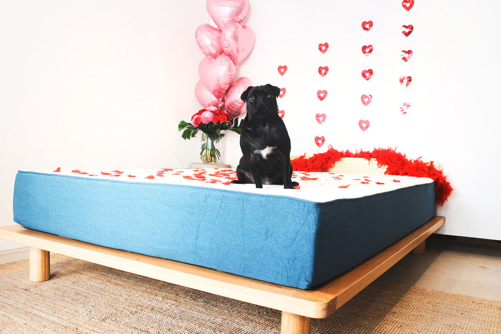 The 6 reasons WHY a koala mattress makes the perfect Valentine's Day date.