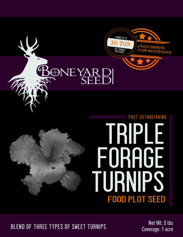 Fall food plot blend of 2 types Forage turnips and large bulb turnip create huge Forage for all season deer hunting