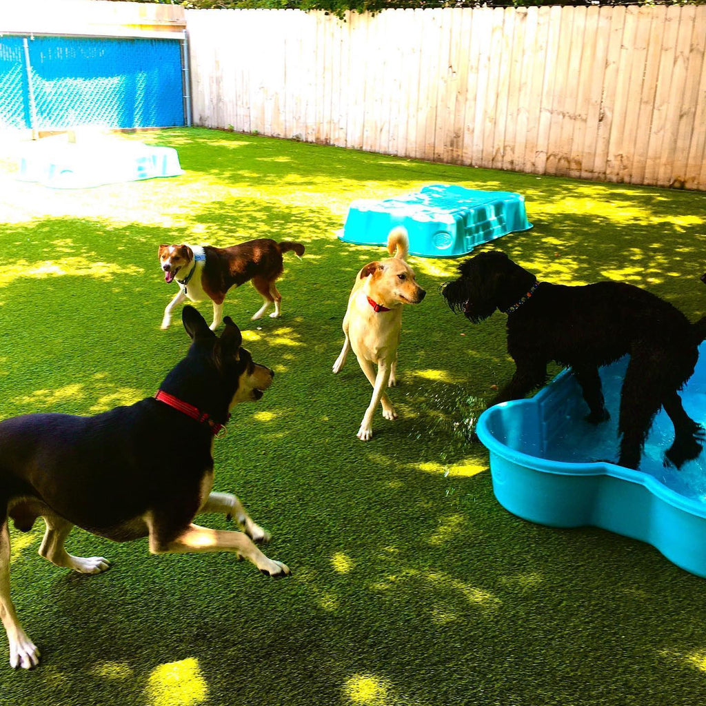 Rex's Doggy Daycare