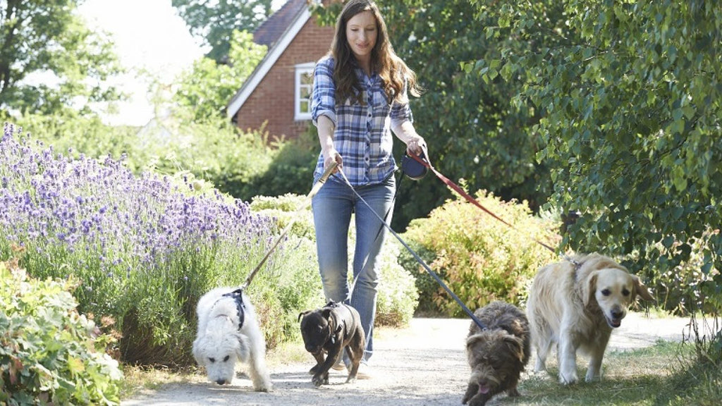 September 8: National Dog Walker Appreciation Day