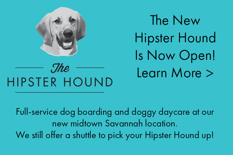 The Hipster Hound at Home Pet Sitting Service