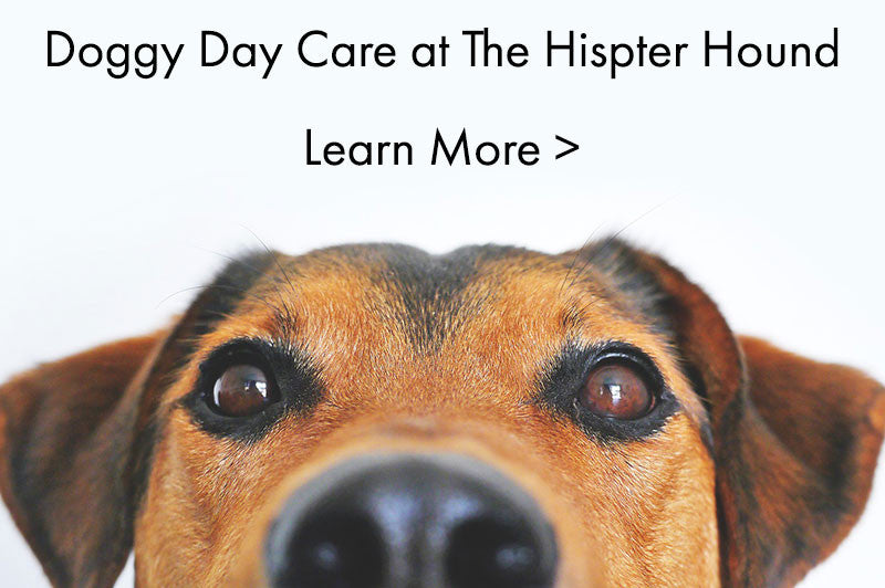 The Hipster Hound Doggy Day Care