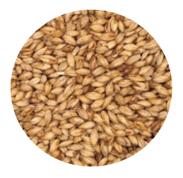 Cherry Wood Smoked Malt - Briess (per lb)