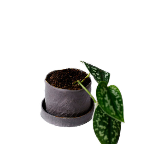 Small Dark Grey Ceramic Plant Pot with Plate