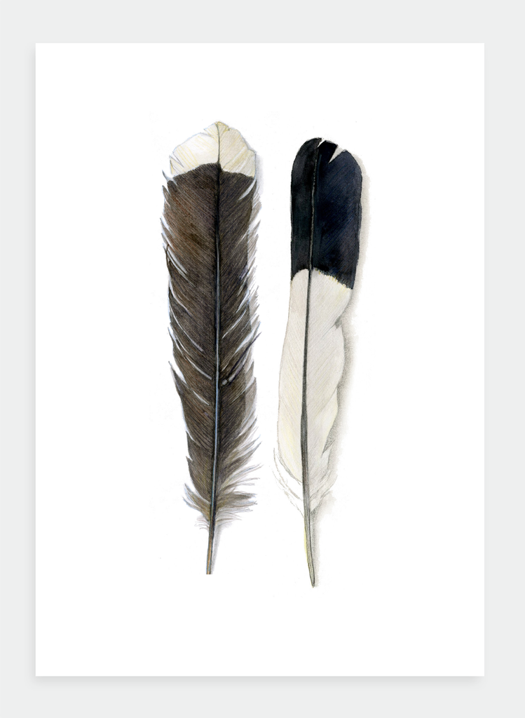 DB18 Feathers  (Pack of 6)