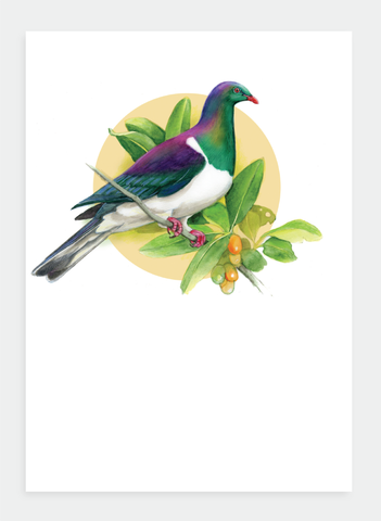 DBM19 Kereru  (Pack of 6)