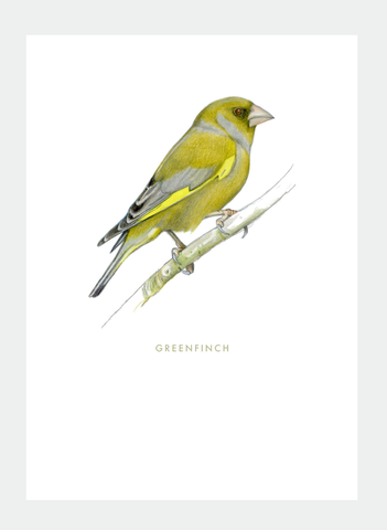 DB39 Greenfinch (Pack of 6)