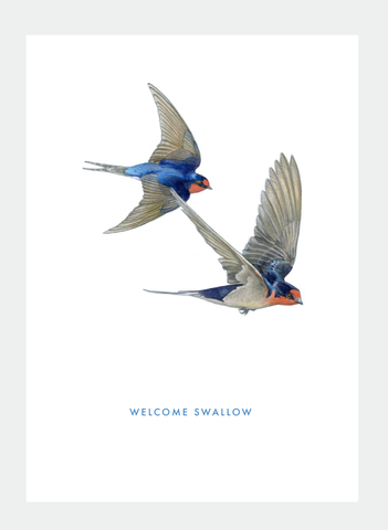DB43 Welcome Swallow (Pack of 6)