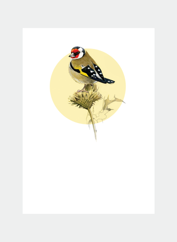DBM13 Goldfinch (Pack of 6)
