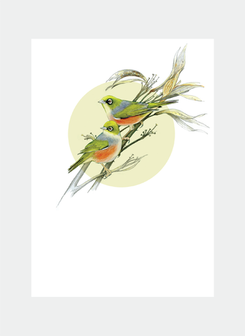 DBM15 Waxeye  (Pack of 6)