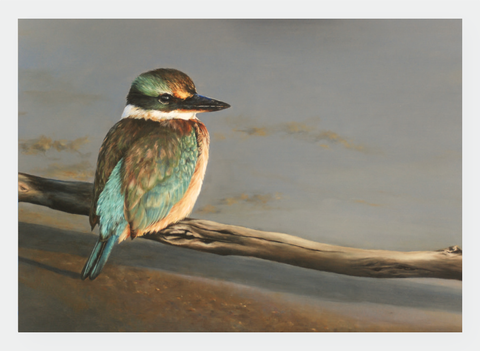 FAMG08 Kingfisher (Pack of 6)