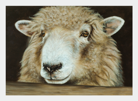FAMG09 Sheep (Pack of 6)