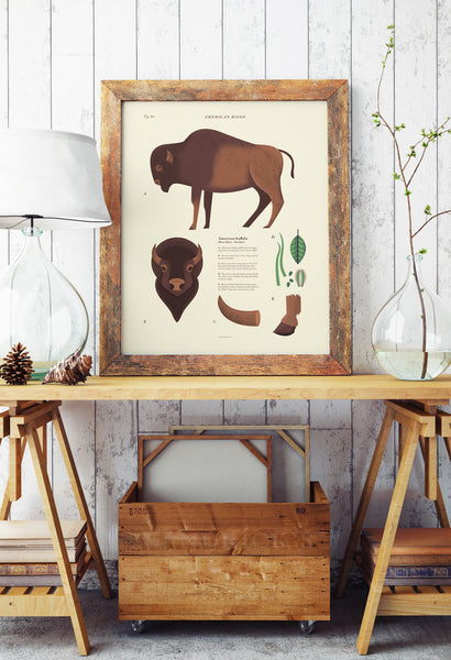 American Bison Scientific Print