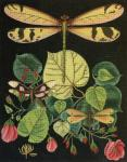 Dragonflies and Roses Needlepoint Canvas - needlepoint