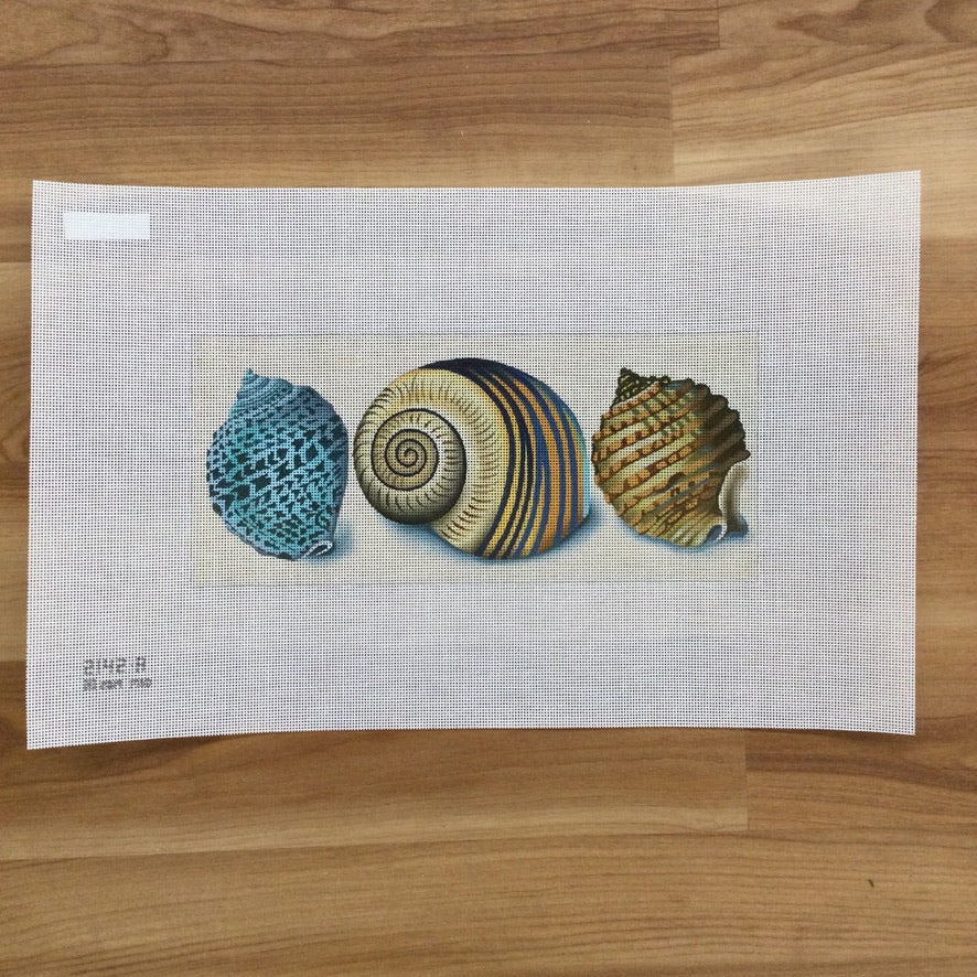 Shells Canvas