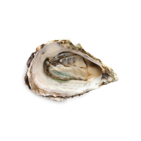 Native Oysters - 12doz (1.25ea)