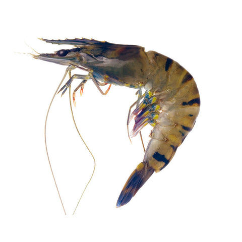 Large Tiger Prawns 12doz (0.75ea)