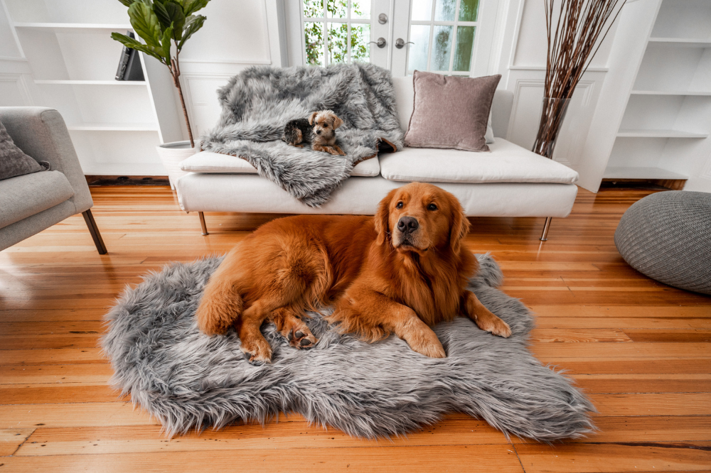 Charcoal Grey Blanket and Bed with Golden Retriever Dog and Yorkie Dog