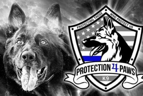 K9 Warrior Dogs