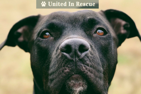 United In Rescue